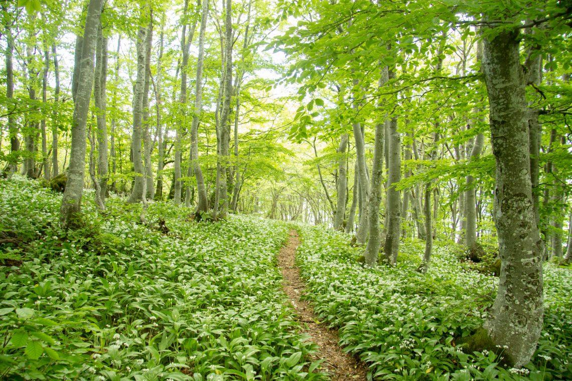 gozdna terapija