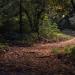 gozdna terapija na daljavo